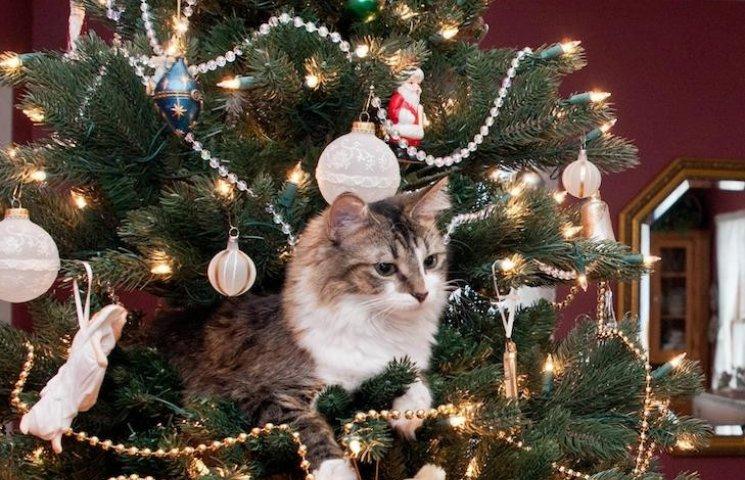 """Як швидко """"розібрати"""" ялинку і феєрично попрощатися з новорічними святами"""