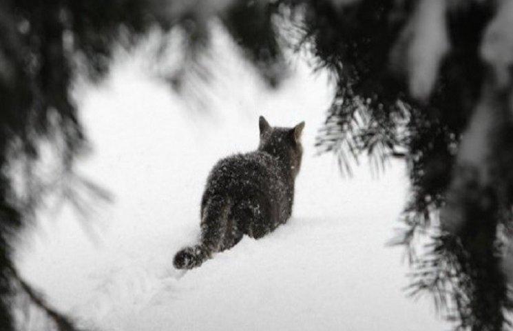Хуртовини та мороз будуть завтра на Хмел…