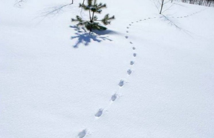 У Дніпрі патрульні переслідували крадія по слідах на снігу
