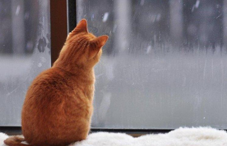 Погода у Полтаві 11 січня