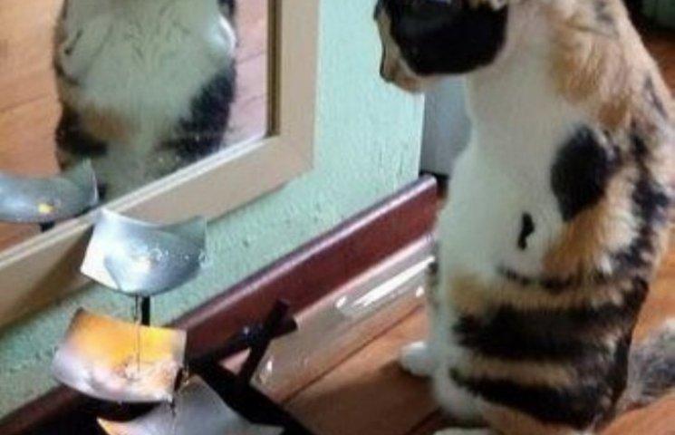 Як кішка-інвалід показує, що щастя існує