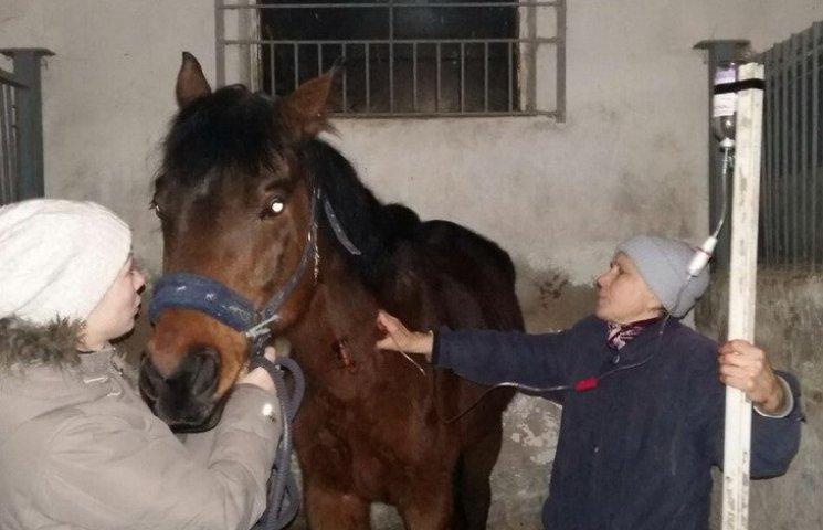 У Дніпрі показали, як лікують врятованих від живодерів коней