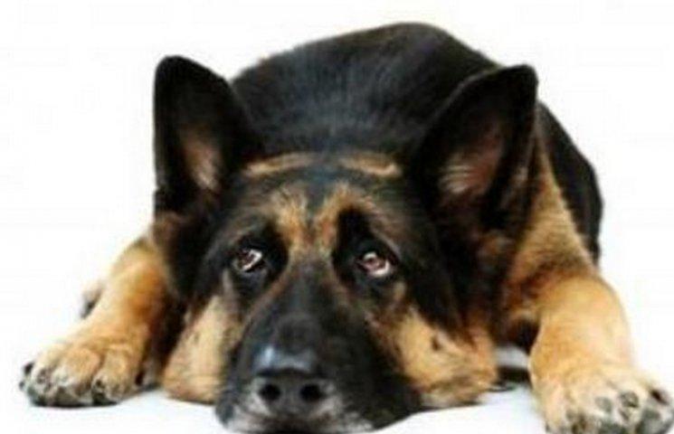 У Дніпрі планують встановити пам'ятник собачій вірності