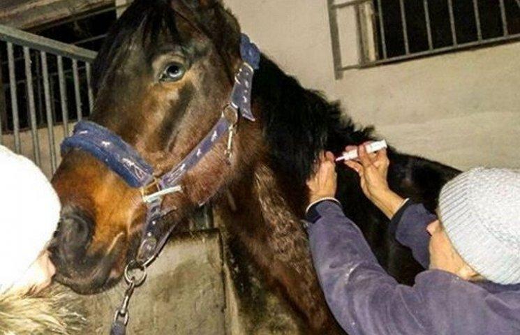 Врятовані від живодерів коні одужують зусиллями волонтерів