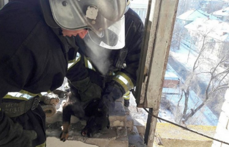 У Кам'янському рятувальники визволили собаку з балкону покинутої будівлі