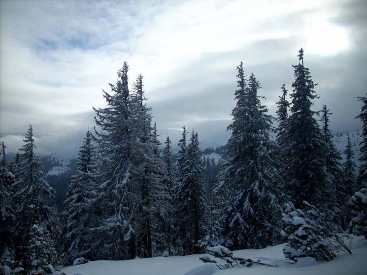 Якими бувають західні Ґорґани, коли схили вкриває снігом