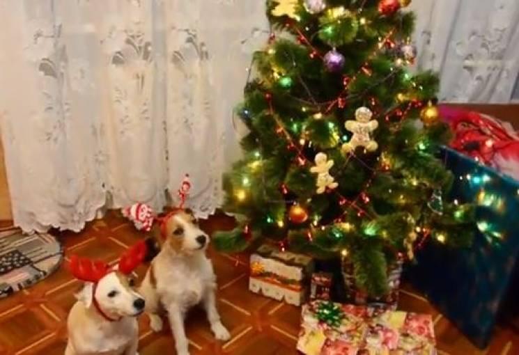 В'язана ялинка і сніговик з капусти: Як на Дніпропетровщини створювали новорічний настрій