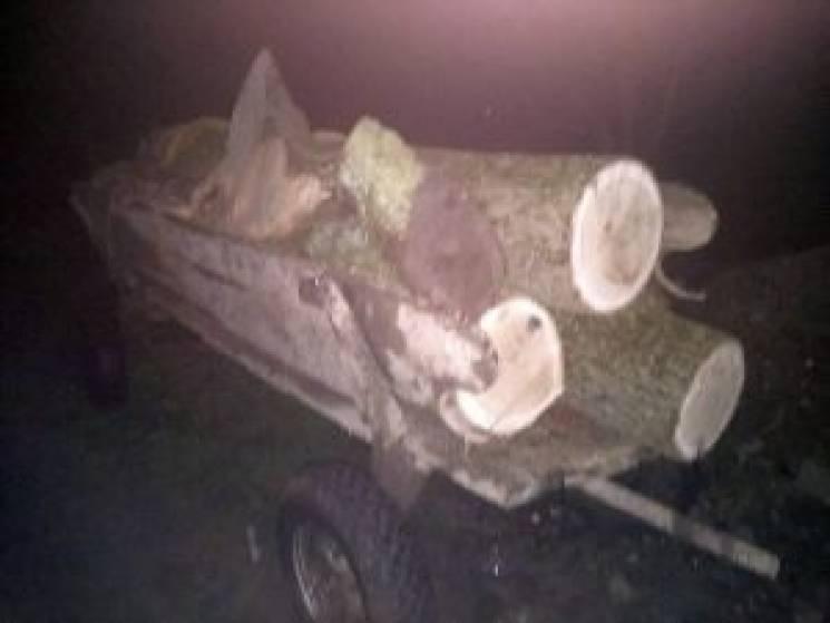 На Тернопільщині вирубали дубів на кількадесят тисяч