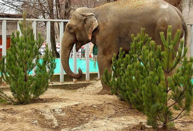 Як у Харкові слони новорічними ялинками кидалися (ВІДЕО)