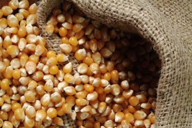 У літньої вінничанки вкрали півтонни зерна