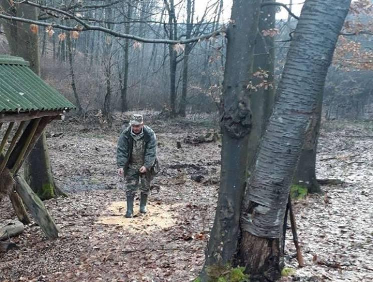 У закарпатських лісах підгодовують диких тварин, аби ті змогли пережити зиму (ФОТО)