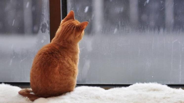Якою буде погода у Вінниці у вихідні