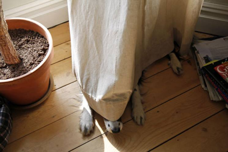 Смішні боягузи: Як поводяться собаки, котрі трохи нашкодили (ФОТО)
