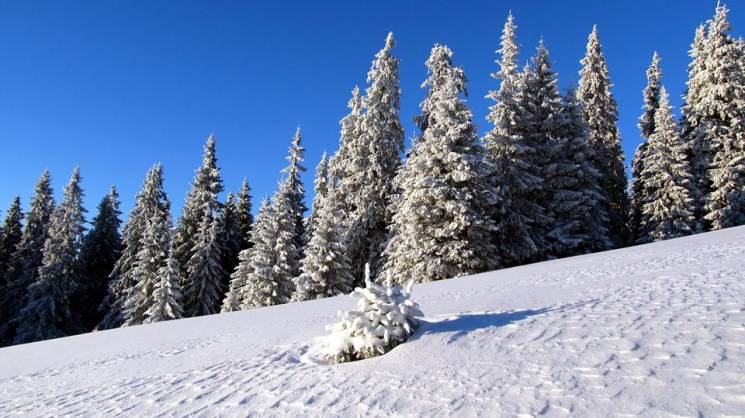 Якою непорушною буває зима у віддаленому…
