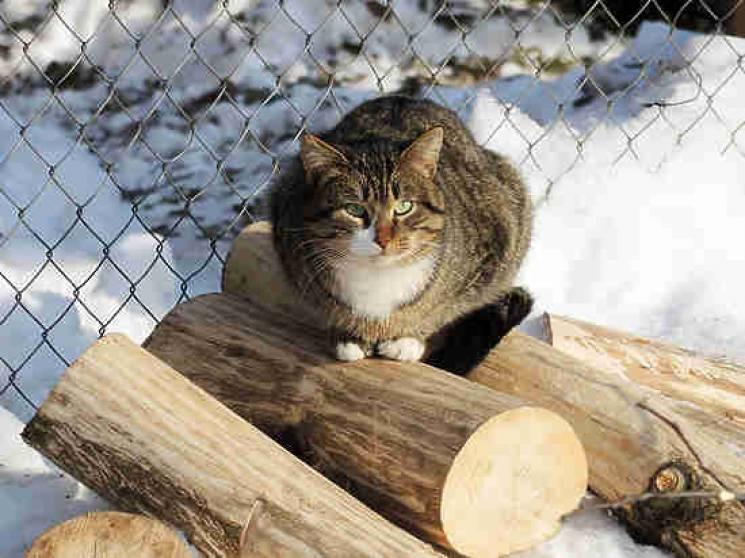 На России кот спас мальчика…