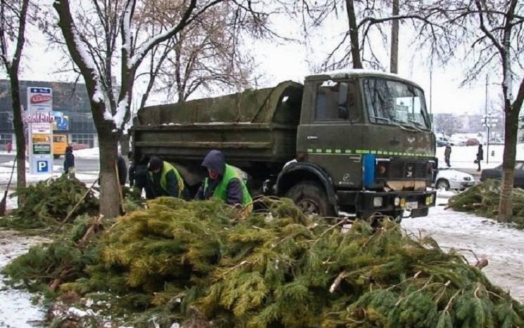 У Павлограді знайшли застосування непроданим ялинкам (ФОТО)