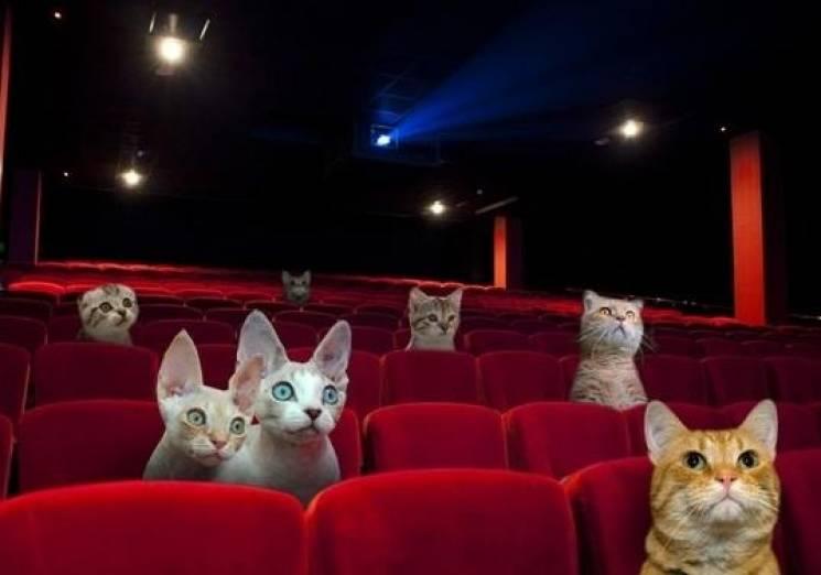 Открытки днем, пошли в кино смешные картинки
