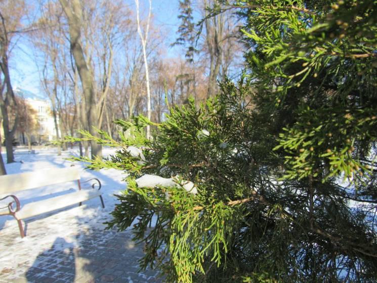 Похмуро та сніжно: Якої погоди чекати у Черкасах 10 січня