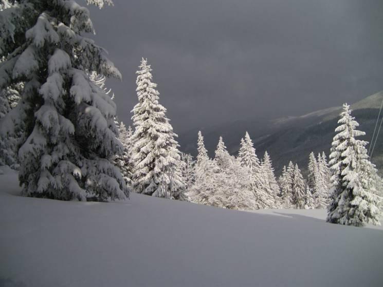 """Зима в Карпатах: Як мальовничо засипало снігом нацпарк """"Синевир"""" (ФОТО)"""
