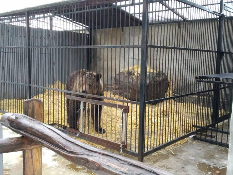 На Запоріжжі реабілітують ведмедів і лев…