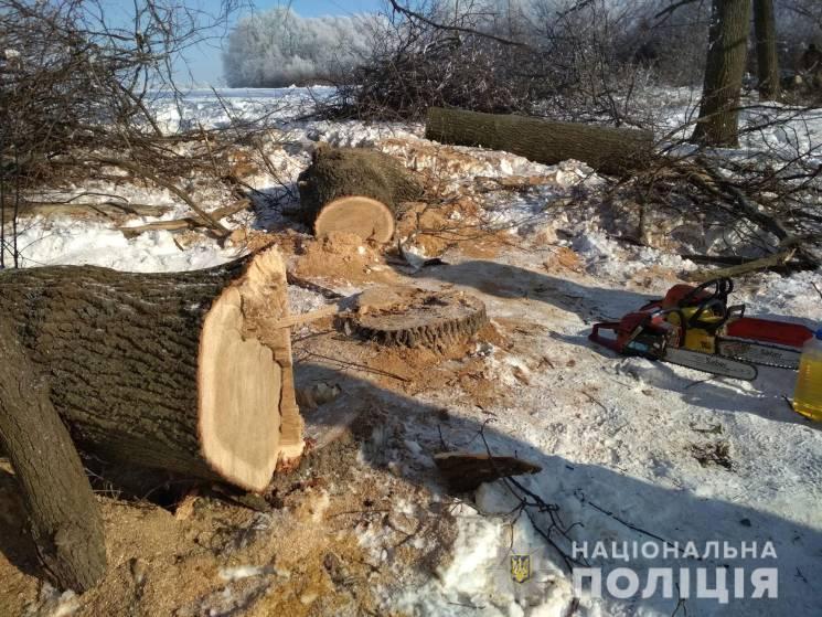 """На Полтавщині """"чорні лісоруби"""" спиляли 1…"""
