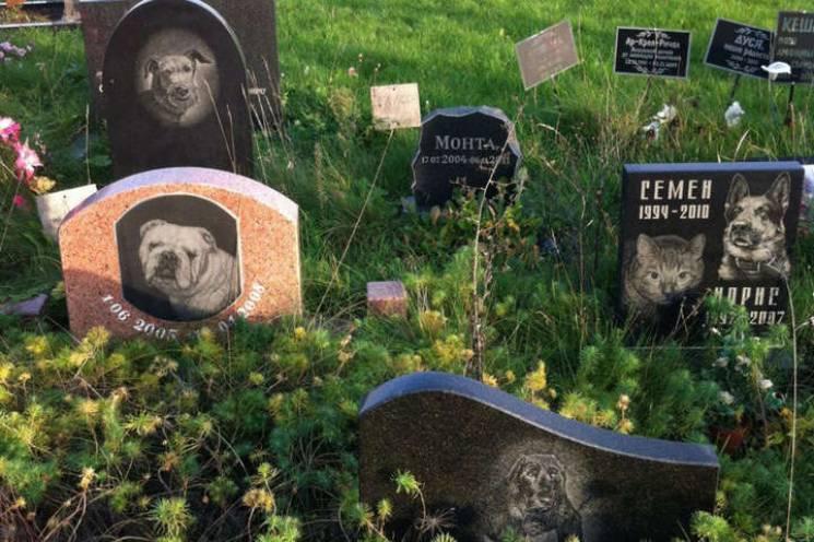 У Києві з'явиться кладовище для дом…