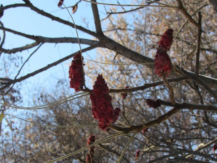 Сіре небо і дрібний сніг: Якої погоди чекати у Черкасах 26 січня