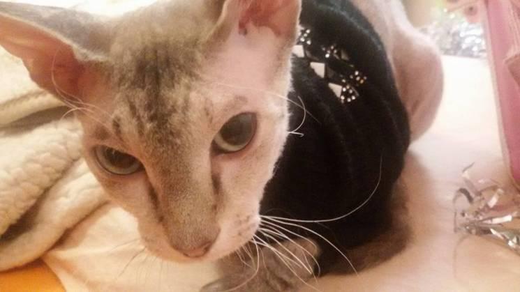 Історія одного кота: Чуча, з якої сепари зробили живу міну