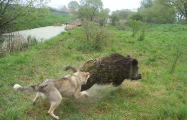 «Свободовцы» получили в пользование 10 тыс. охотничьих угодий на Львовщине