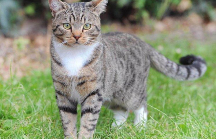 Смелый кот, спасший ребенка, стал номинантом премии «Кошка года в Британии»