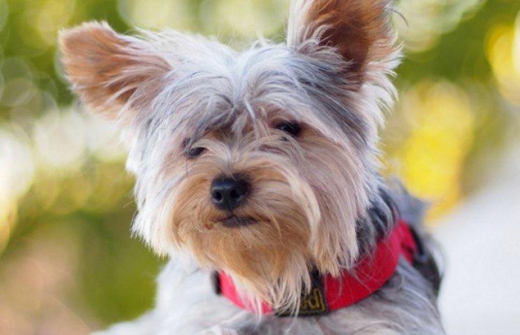У Сумах пройшла міжнародна виставка собак (ВІДЕОФАКТ)