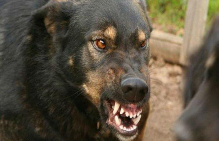 Через байдужість влади до безпритульних тварин на Сумщині фіксують випадки сказу