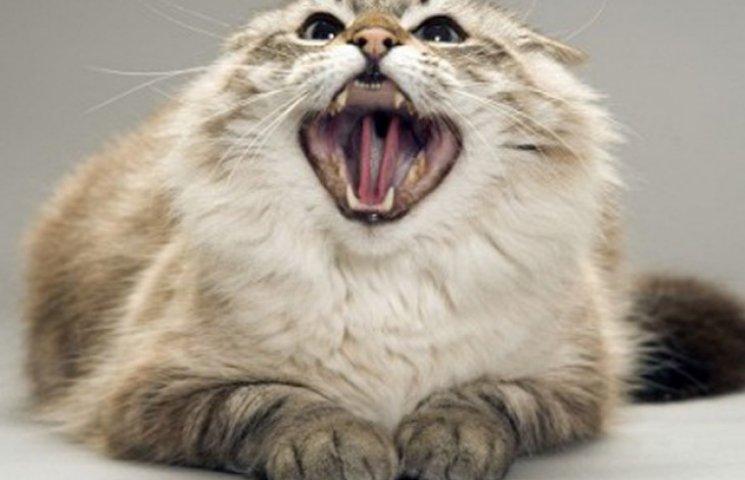 У Запорізькій області виявили ще одного скаженого кота