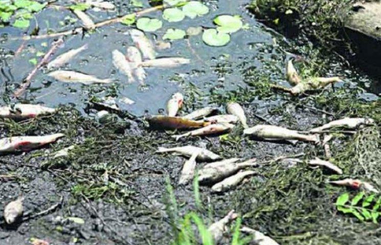Стало відомо, чому масово гине риба в Сутисках