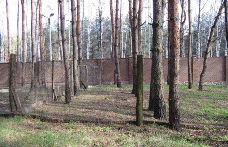 Ліс на Баранівці може дорого коштувати екс-керівникові земресурсів Сумського району