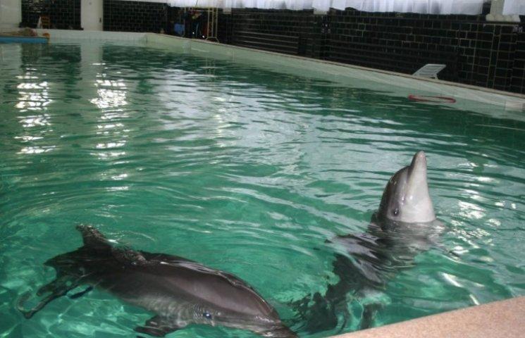 В Хмільнику побудують новий дельфінарій