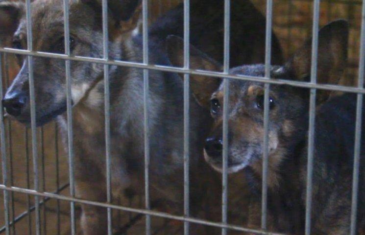 У Львові з притулку випустили хворих собак