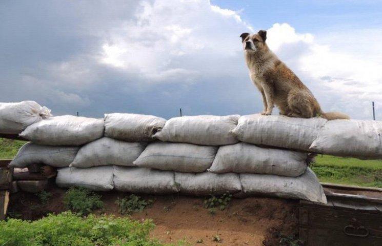 Чим займаються на Донбасі найкращі друзі бійців АТО - 5