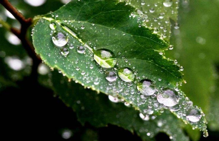 Погода у Черкасах на 4 липня