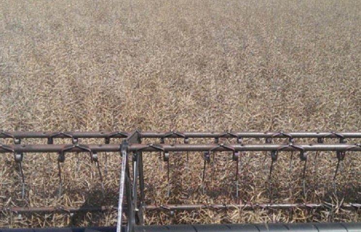 На Хмельниччині почали збирати урожай зернових