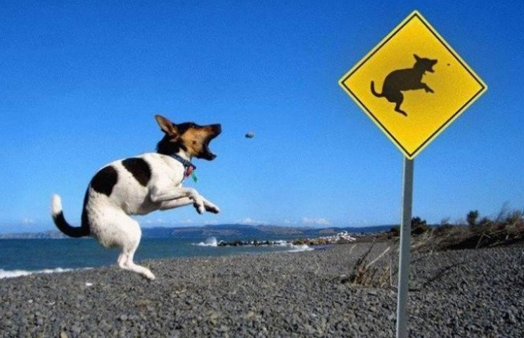 10 найдивніших пляжних знаків