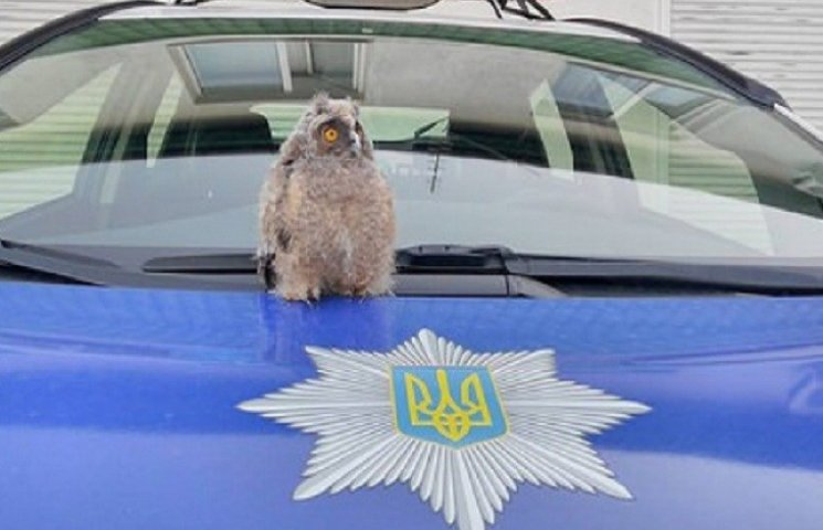 """В патрульной полиции Ровно """"служит"""" сова"""