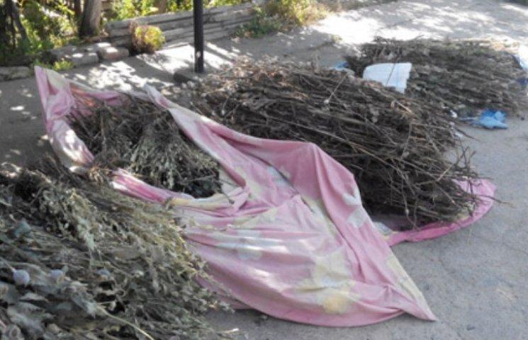 На Миколаївщині жінка насушила 100 кг снодійного маку