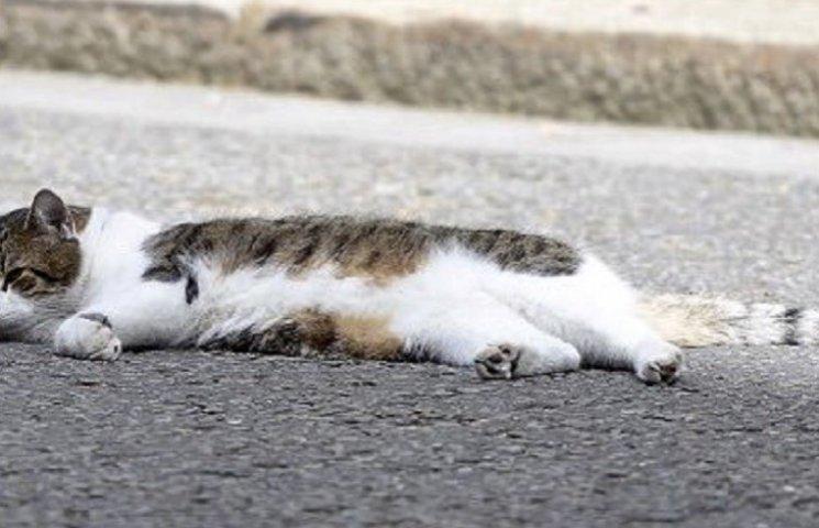 Після відставки Кемерона кіт Ларрі залишиться працювати на Даунінг-стріт