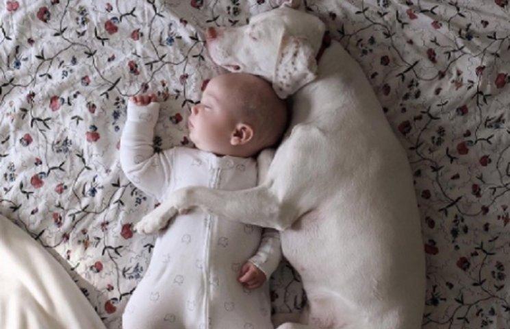 Пес, который постоянно спит с малышом, взорвал Инстаграм