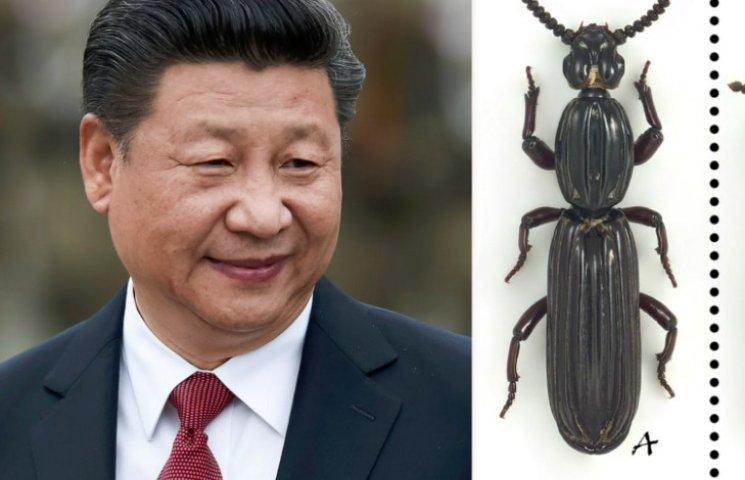 Китайський вчений назвав жука, що харчується гниллю, на честь генсека КНР