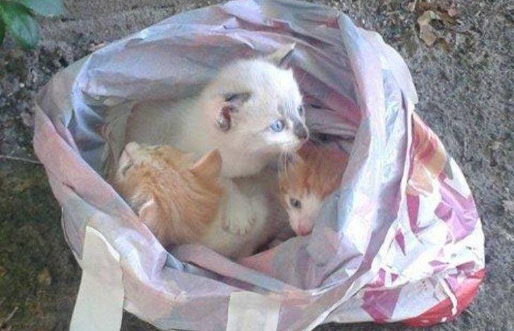 У Миколаєві біля проїзної частини викинули кошенят у пакеті