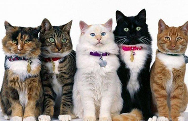 Котофилия в XIX веке: Как раньше обожали котиков