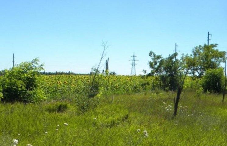 На Миколаївщині знищили 1,5 тис га лісосмуг