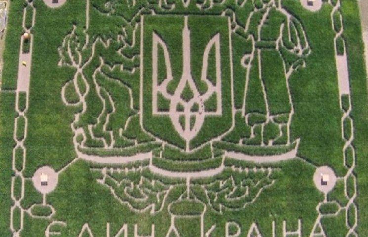 Под Киевом появился гигантский патриотический лабиринт из кукурузы